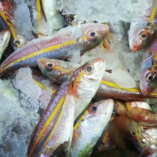 דגים צבעוניים